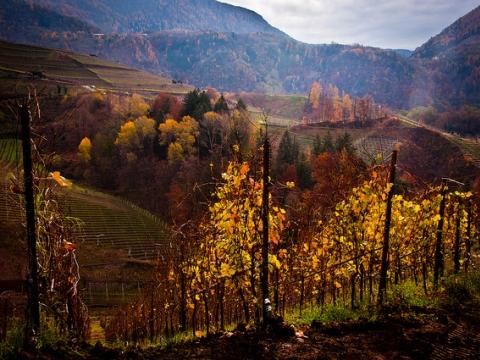 Autentičan odmor-poseta italijanskim vinskim regijama